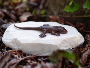 Tuinbeeld brons - bronzen beeld salamander - Bronzartes - Hoogte 5 cm