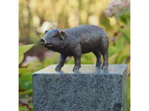 Tuinbeeld - bronzen beeld - Varken - Bronzartes - 12 cm hoog